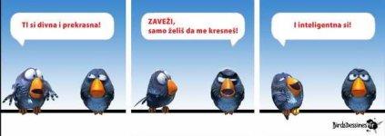 Ptičice.jpg
